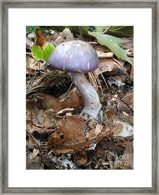 Purple Curved Mushroom Framed Print by Jeannie Atwater Jordan Allen