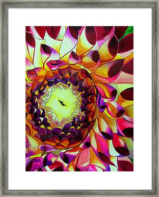 Purple Dahlia Framed Print by Sacha Grossel