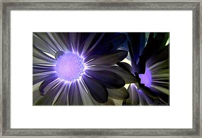 Purple Daisies Negative Effects Framed Print by Danielle  Parent