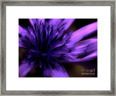 Purple Dance Framed Print