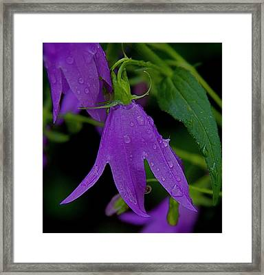 Purple Framed Print by Daniel Sheldon