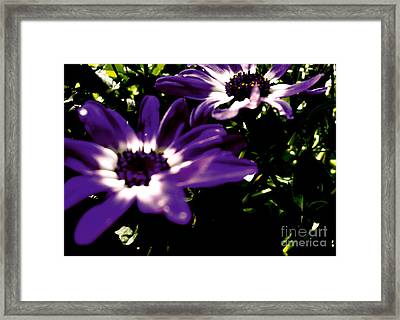 Purple Daze Framed Print by Cathy Dee Janes