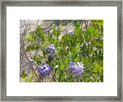 Purple Desert Flowers Framed Print