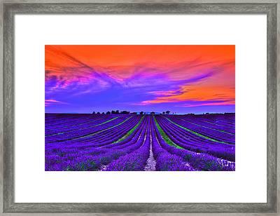 Purple Dream Framed Print by Midori Chan