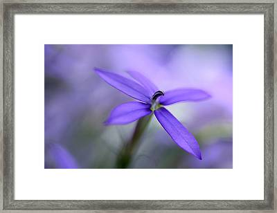 Purple Dreams Framed Print by Annie Snel