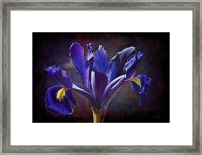 Purple Dutch Iris Framed Print by Phyllis Denton