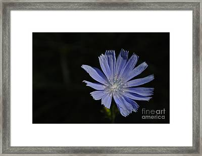 Purple Emerging Framed Print