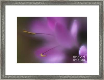 Framed Print featuring the photograph Purple Essence by Mary Lou Chmura