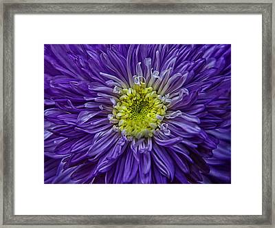 Purple Explosion Framed Print by Joachim G Pinkawa