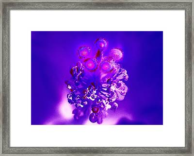 Purple Eyes  Framed Print