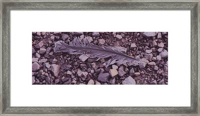 Purple Feather Framed Print