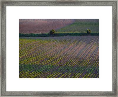 Framed Print featuring the photograph Purple Fields by Evelyn Tambour
