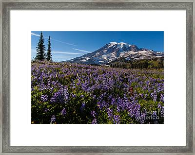 Purple Fields Forever And Ever Framed Print by Mike Reid