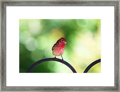 Framed Print featuring the photograph Purple Finch by Trina  Ansel