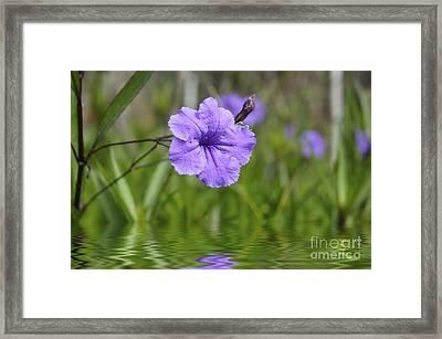Purple Flower Framed Print by Aged Pixel