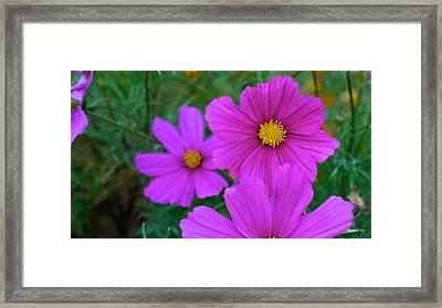 Purple Flower Framed Print by Alex King