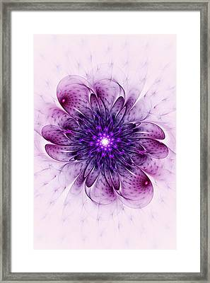 Single Purple Flower Framed Print by Anastasiya Malakhova