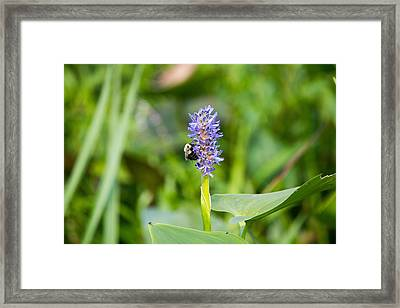 Purple Flower And Bee Framed Print