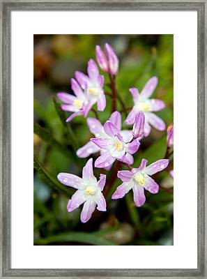 Framed Print featuring the photograph Purple Flower by Bob Noble Photography