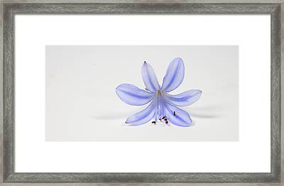 Purple Flower Framed Print by Cecil Fuselier