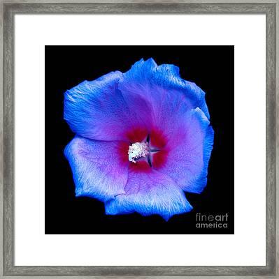 Purple Flower Framed Print by Julian Cook