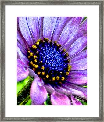 Purple Flower Sensation Framed Print