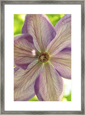 Purple Flower Framed Print by Thomas Leon