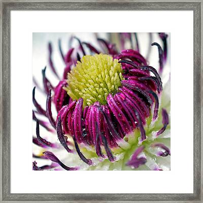 Purple Flower Framed Print by Tommytechno Sweden