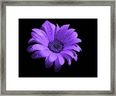 Purple Flower With Rain Framed Print by Bruce Nutting