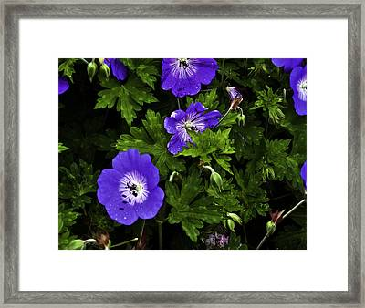 Framed Print featuring the photograph Purple Flower01 by Timothy Latta