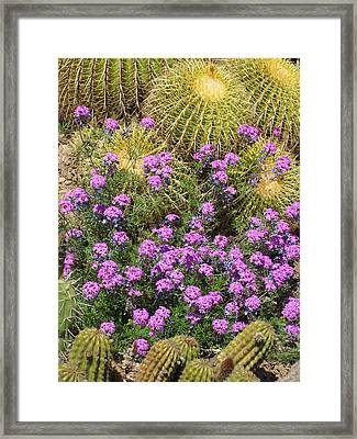 Purple Flowers And Barrel Cacti Framed Print by Mark Barclay