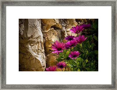 Purple Flowers And Rocks Framed Print
