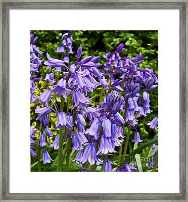 Framed Print featuring the photograph Purple Flowers by Gena Weiser