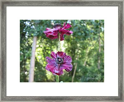 Framed Print featuring the photograph Purple Flowers by HEVi FineArt