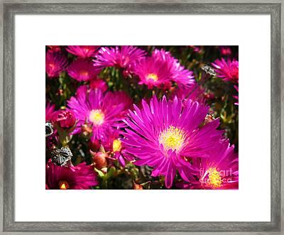 Purple Flowers Framed Print by Jelena Jovanovic