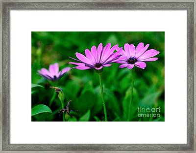 Framed Print featuring the photograph Purple Flowers by Joe  Ng
