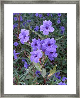 Framed Print featuring the photograph Purple Flowers by Laurel Powell