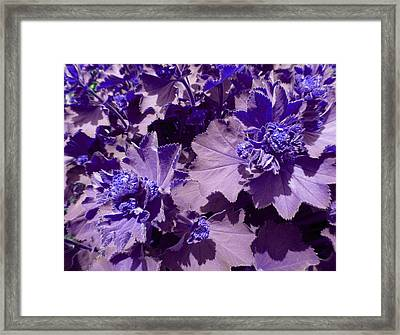 Framed Print featuring the photograph Purple Flowers by Laurie Tsemak