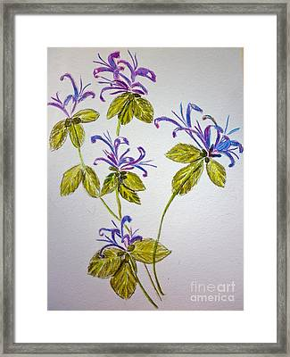 Purple Flowers Framed Print