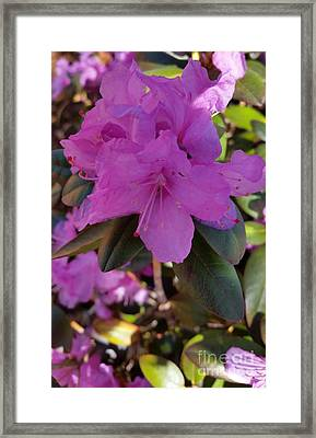Framed Print featuring the photograph Purple Flowers by Rose Wang