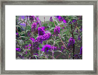 Framed Print featuring the photograph Purple Flowers by Suzanne Powers