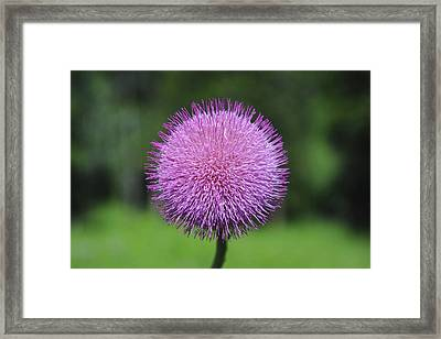 Purple Fuzz Framed Print