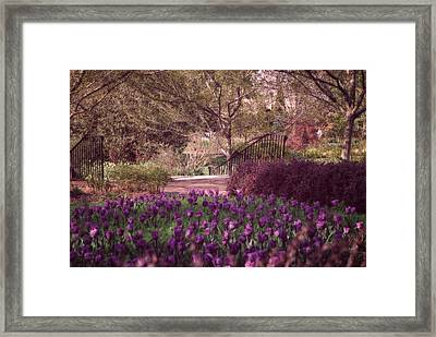 Purple Garden Framed Print by Mary Timman