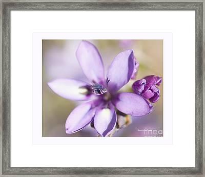 Purple Geranium 2 Framed Print by Artist and Photographer Laura Wrede