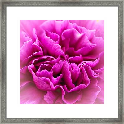 Purple Geranium In Macro Framed Print by Elizabeth Thomas