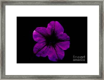 Framed Print featuring the photograph Purple Geranium by Scott Lyons