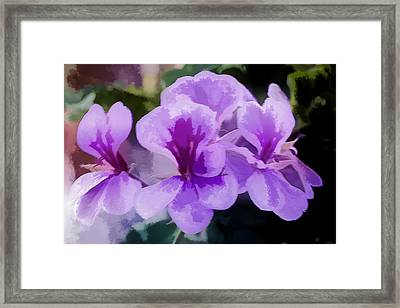 Purple Geraniums  Framed Print by Photographic Art by Russel Ray Photos