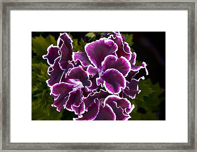 Purple Gernaium Framed Print by Photographic Art by Russel Ray Photos