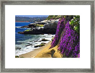 Purple Glory At La Jolla Cove Framed Print