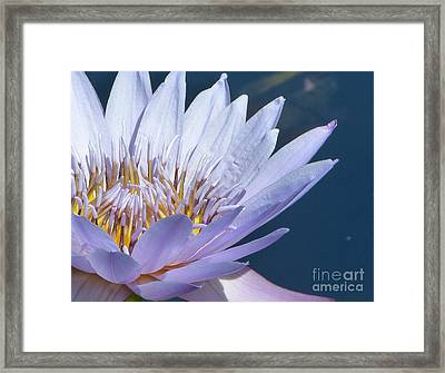 Purple Glory II Framed Print